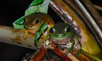 My garden, your ears: fire, frogs and crickets.